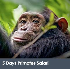 5 Days Primates Uganda Rwanda