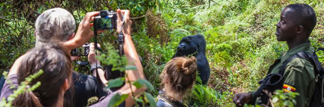gorilla tracking in Bwinfi forest