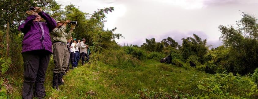 gorilla trek rwanda