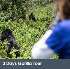 3 Days Gorilla Tour Rwanda