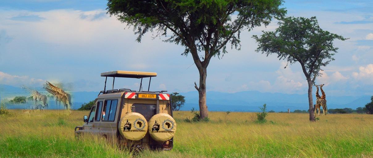 Uganda safari with mission africa safaris