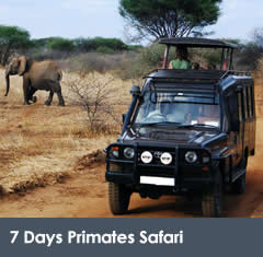 7 Days Uganda Wildlife Safari