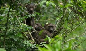 3 Day safari in Queen Elizabeth National Park