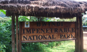 2 Day Gorilla Tour in Bwindi Impenetrable National Park