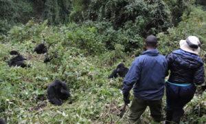 3 Days Gorilla Tour of Rwanda and golden monkeys