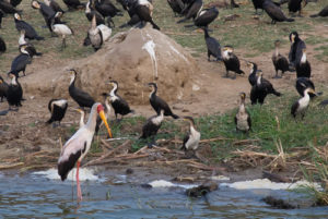 birdwatching in queen elizabeth national park