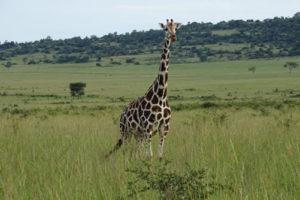 Matheniko Game Reserve Uganda - Cost, Price & Accommodation